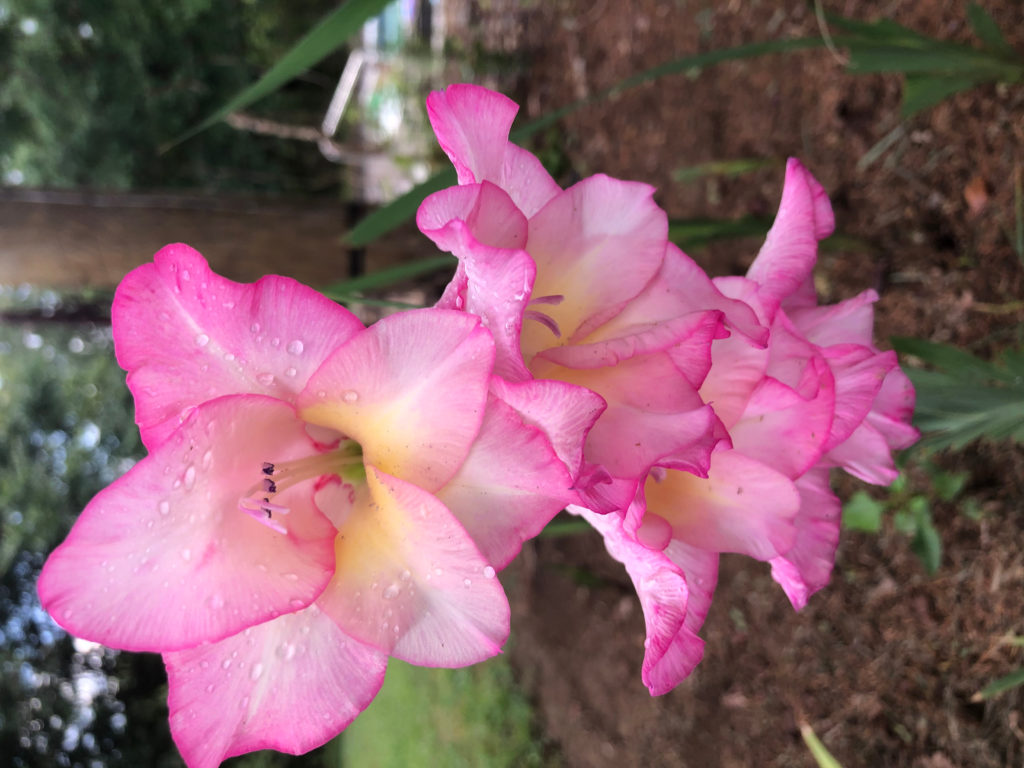 memaw flower